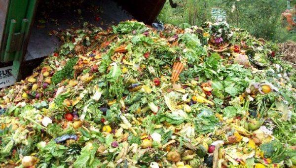 Сбор, транспортирование и обезвреживание биологических отходов